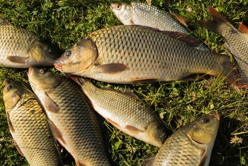 Платная рыбалка на озере Калды