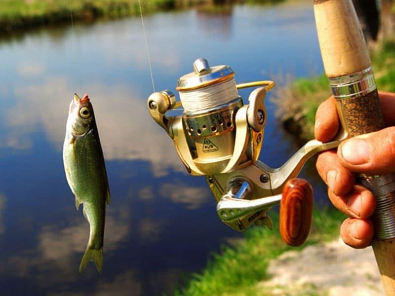 Удочка и рыба