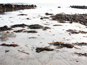 Поиск пескожила