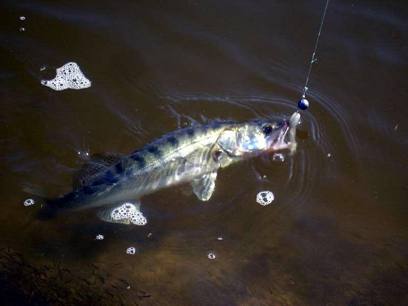 Донная рыбалка: удилище и его особенности