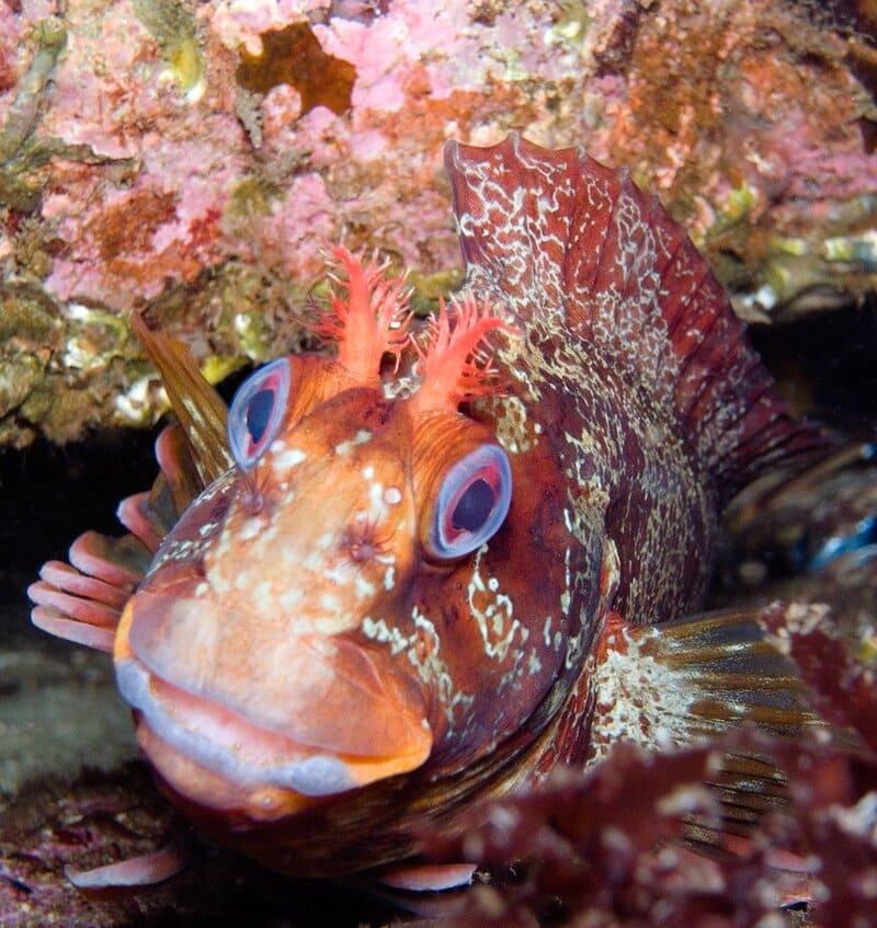 Рыба морская собачка: фото и описание