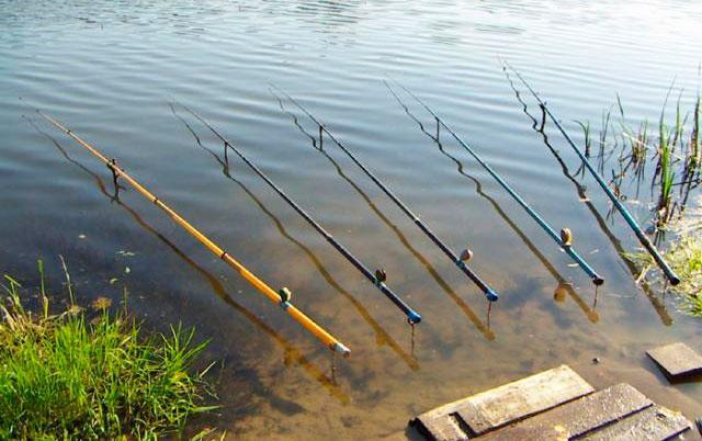 Как выбрать удочку для летней рыбалки