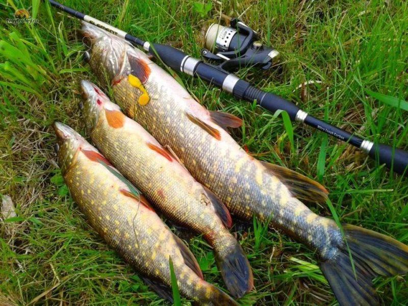 Экзотические виды рыбалки