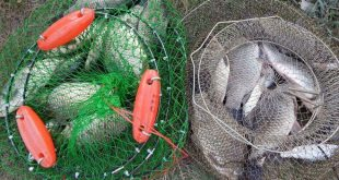 Как хранить рыбу в садках