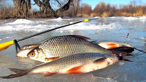 Особенности рыбной ловли в феврале