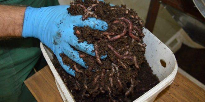 Секреты хранения навозных червей