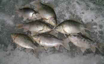 Круглогодичная рыбалка на озерах Курганской области