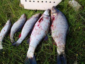 Рыбалка на реке Чусовая