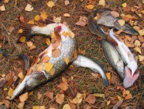 Осенние условия для рыбалки